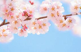 家族葬の様子